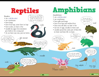 Animals: Amphibians and Reptiles