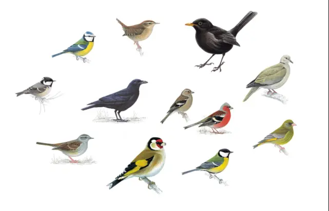 Animals: Birds