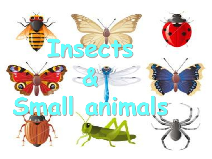 Animals: Insects and Small Creatures