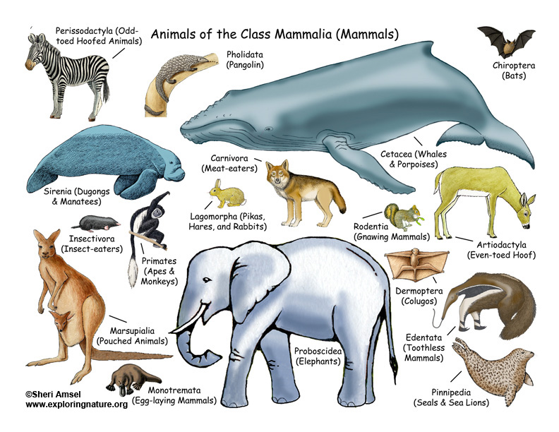 Animals: Mammals