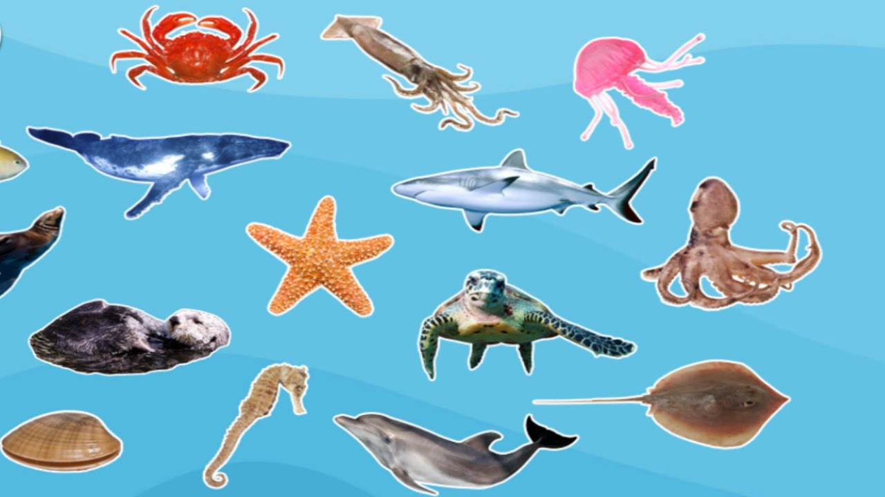 Animals: Sea Animals